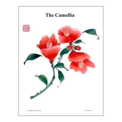 Camellia Brush Painting Class Lesson by Nan Rae