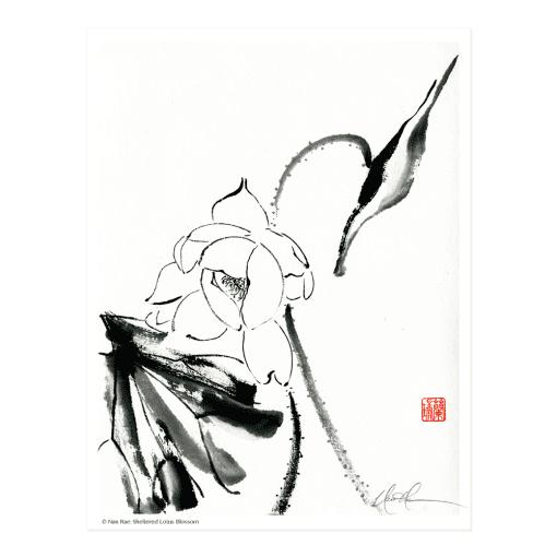 L2509 Sheltered Lotus Blossom Print © Nan Rae