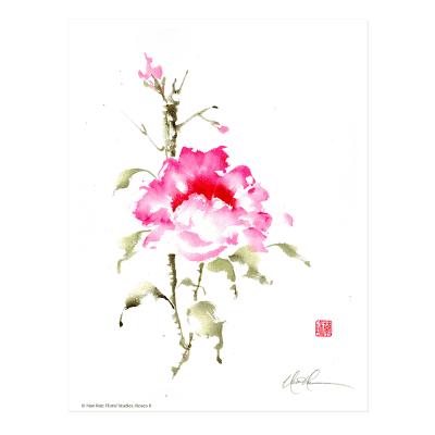 L2702 Floral Studies: Rose II Print © Nan Rae