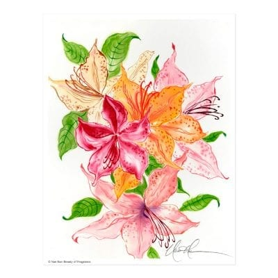 Beauty of Fragrance Print by Nan Rae